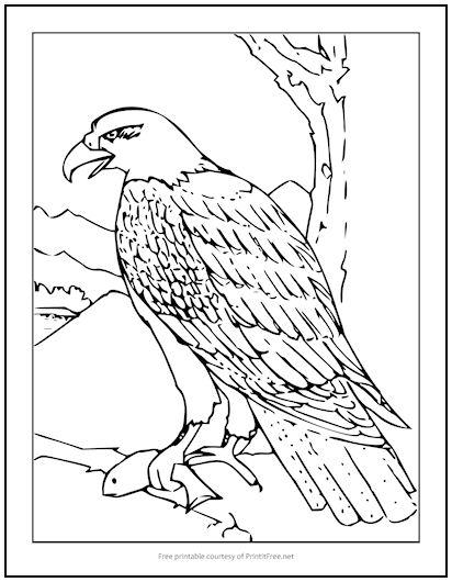 - Bald Eagle Coloring Page Print It Free